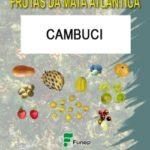 Cambuci: Série Frutas da Mata Atlântica