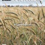 Informe Agropecuário 274 - Trigo Tropical